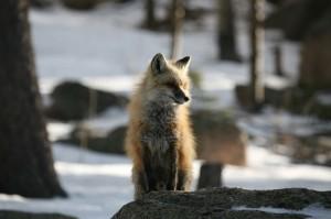Fox-041107-002