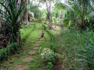 Spider-Walk---Tonga