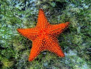 Starfish-Maho-2012-a