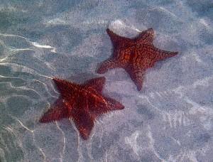 StarfishDouble-Canvas